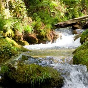 Ruta del río de la Fraga, Moaña